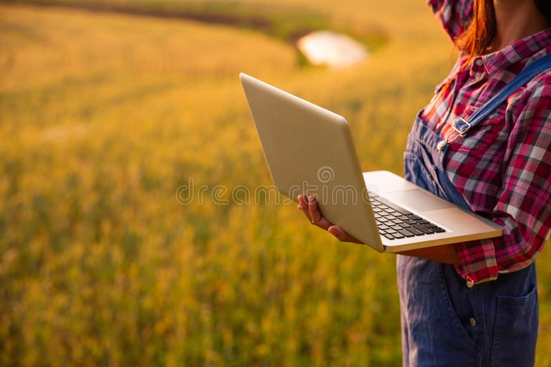 Granjero de sexo femenino que usa el ordenador portátil en el campo de la cosecha del trigo del oro, concepto de cultivo elegante foto de archivo libre de regalías