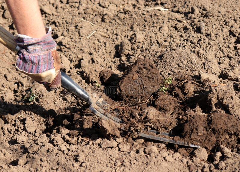 Granjero de trabajo en el jardín Fertilizante orgánico para el suelo manuring, preparando el campo para plantar en primavera, bio imagenes de archivo