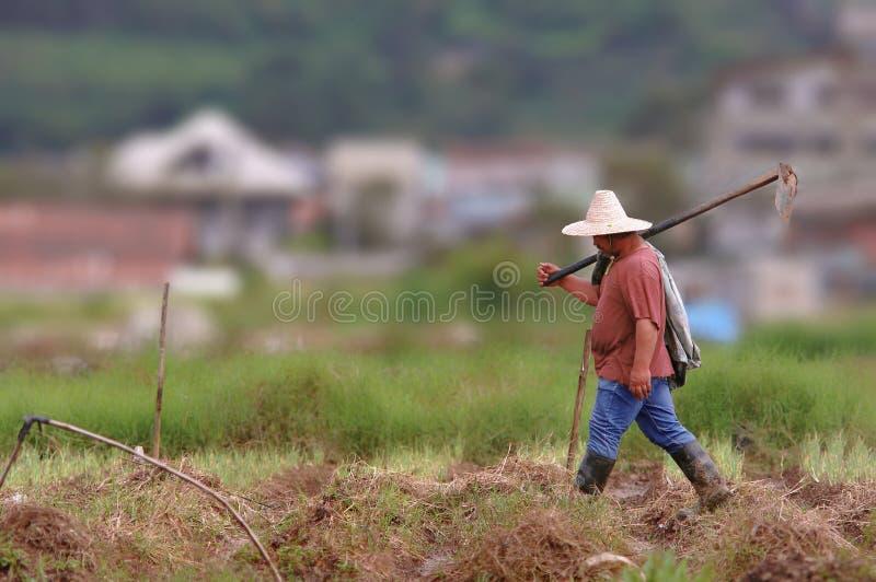 Granjero de una granja de la fresa en la ciudad pH de Baguio fotos de archivo libres de regalías