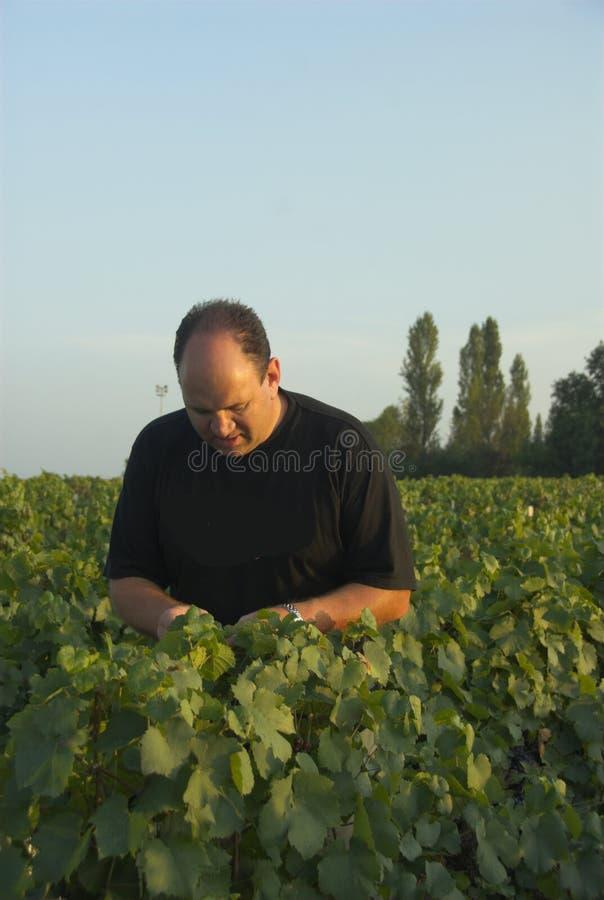 Granjero de vino imagen de archivo libre de regalías
