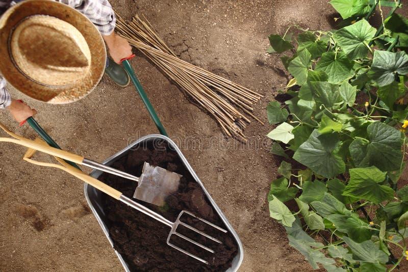 Granjero del hombre que trabaja en huerto, carretilla por completo del fertilizante con la espada y el bieldo, palillos de bambú  fotografía de archivo