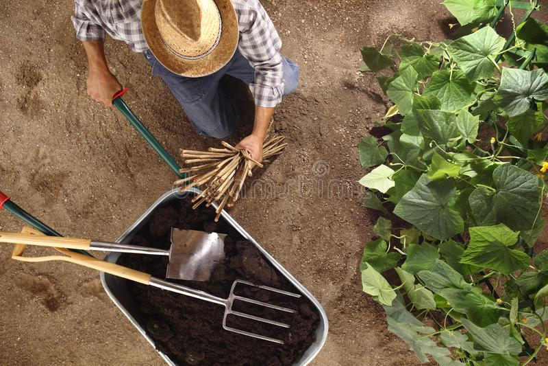 Granjero del hombre que trabaja en huerto, carretilla por completo del fertilizante con la espada y el bieldo, palillos de bambú  fotos de archivo libres de regalías