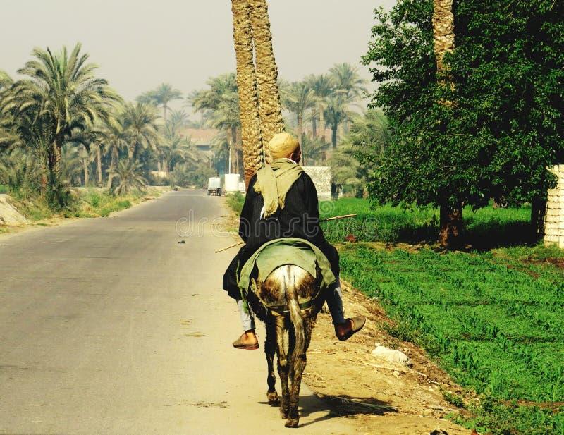 Granjero egipcio a caballo fotografía de archivo