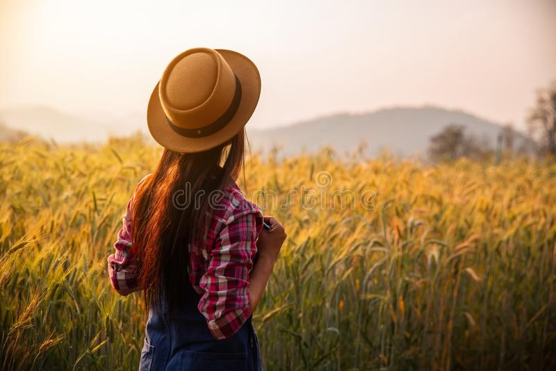 Granjero en actividad madura de la cosecha del planeamiento del campo de trigo imágenes de archivo libres de regalías