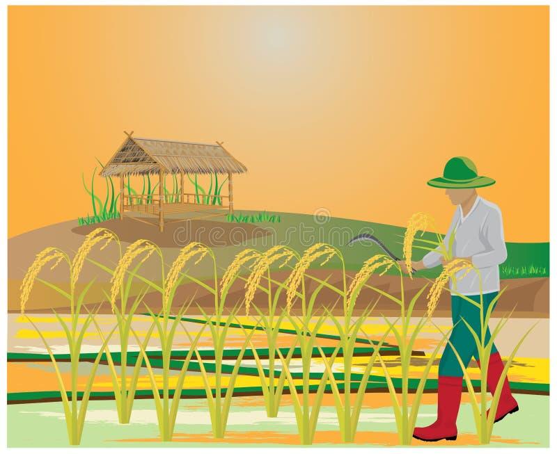 Granjero en campo de arroz ilustración del vector