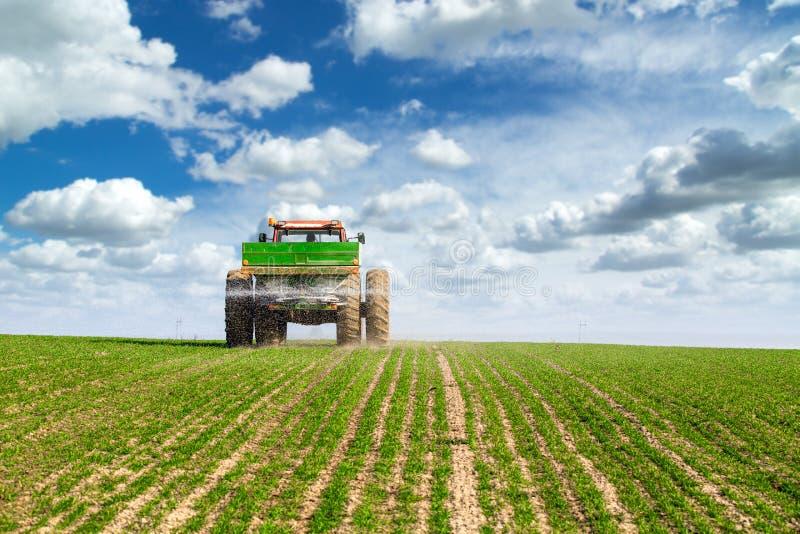 Granjero en campo de trigo de la fertilización del tractor en la primavera con el npk foto de archivo