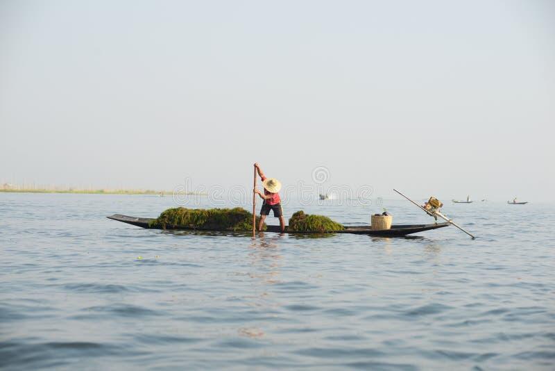 Granjero en el lago Inle en Myanmar en Asia fotografía de archivo