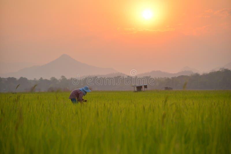 Granjero en granja imagen de archivo libre de regalías