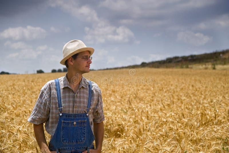 Granjero en un campo de trigo fotografía de archivo libre de regalías