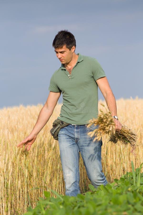 Granjero feliz en campo de trigo imágenes de archivo libres de regalías