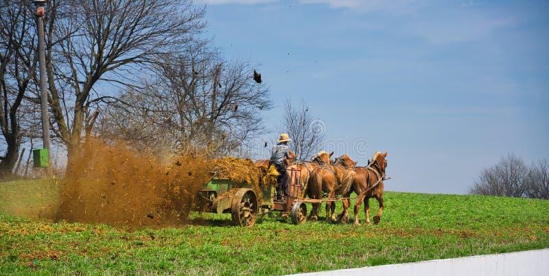 Granjero Fertilizing de Amish la granja foto de archivo libre de regalías