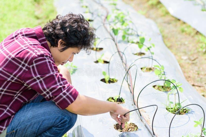 Granjero joven asiático que usa el sistema de la irrigación por goteo imágenes de archivo libres de regalías
