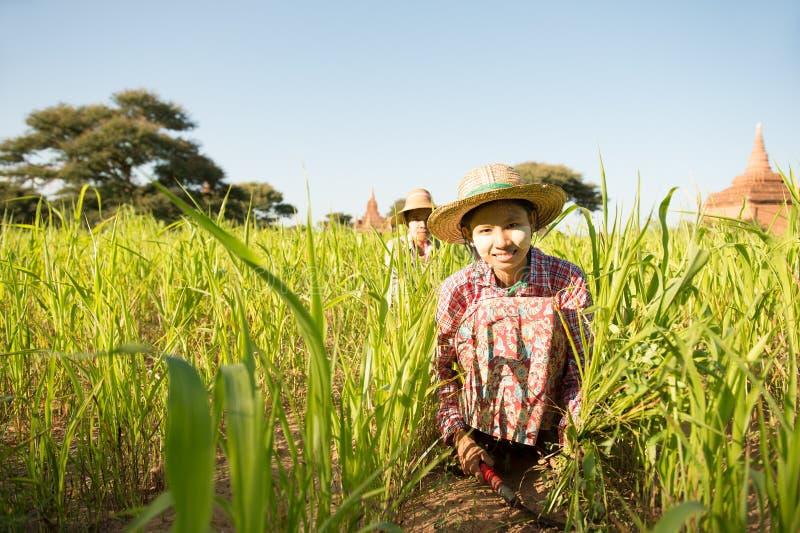 Granjero joven de la hembra de Myanmar del asiático foto de archivo libre de regalías
