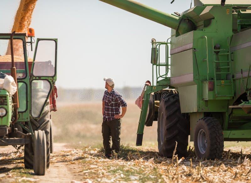 Granjero joven en campos de maíz durante cosecha fotografía de archivo