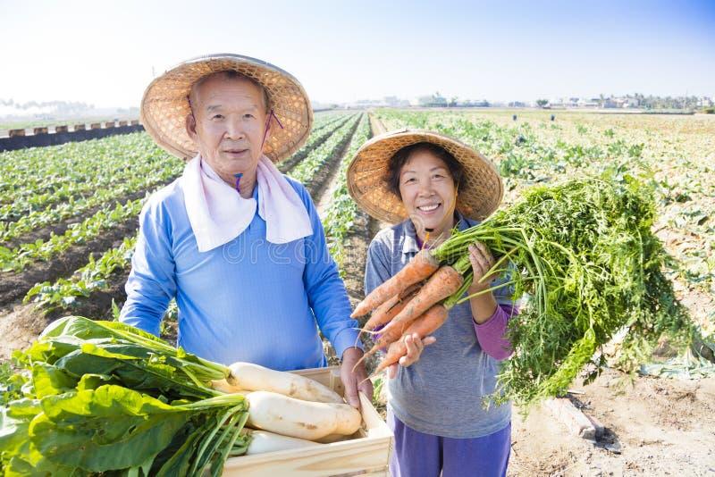Granjero mayor feliz con muchas zanahorias a disposición imagenes de archivo
