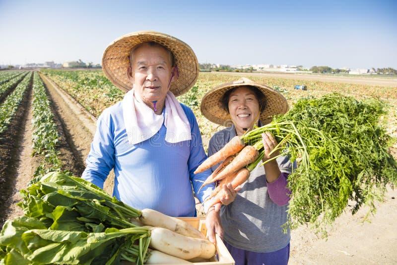 Granjero mayor feliz con muchas zanahorias a disposición imágenes de archivo libres de regalías