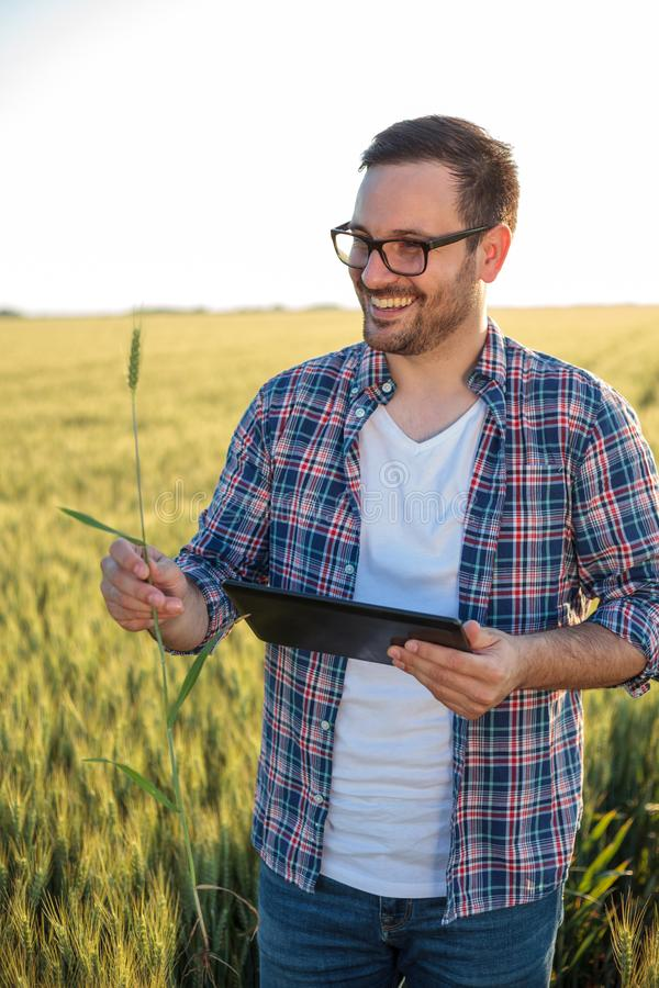 Granjero o agrónomo milenario feliz que examina las plantas del trigo en un campo antes de la cosecha, trabajando en una tableta imagen de archivo libre de regalías