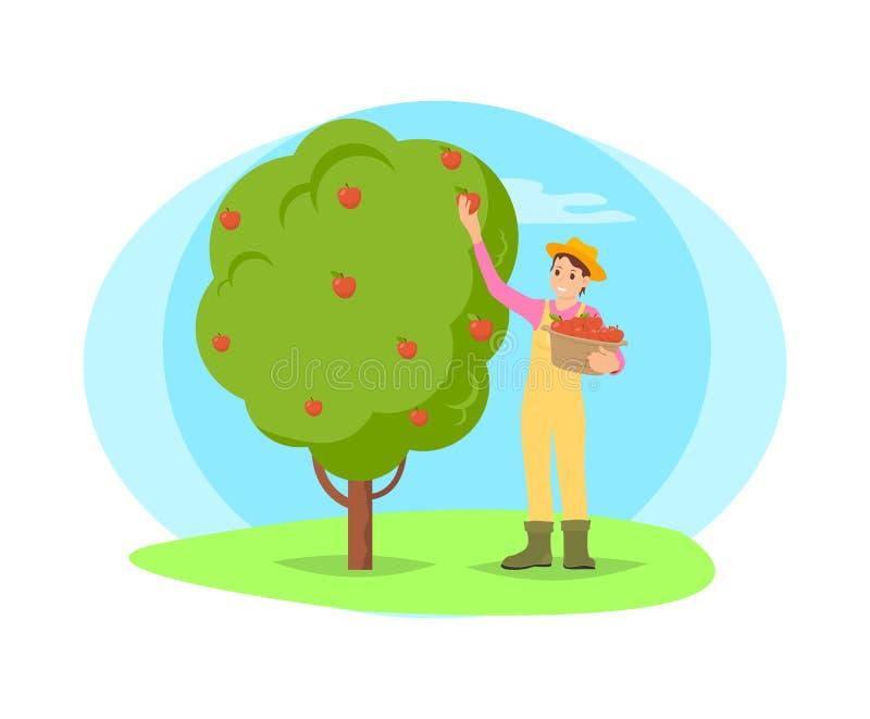 Granjero Picking Fruit del árbol en historieta del jardín ilustración del vector