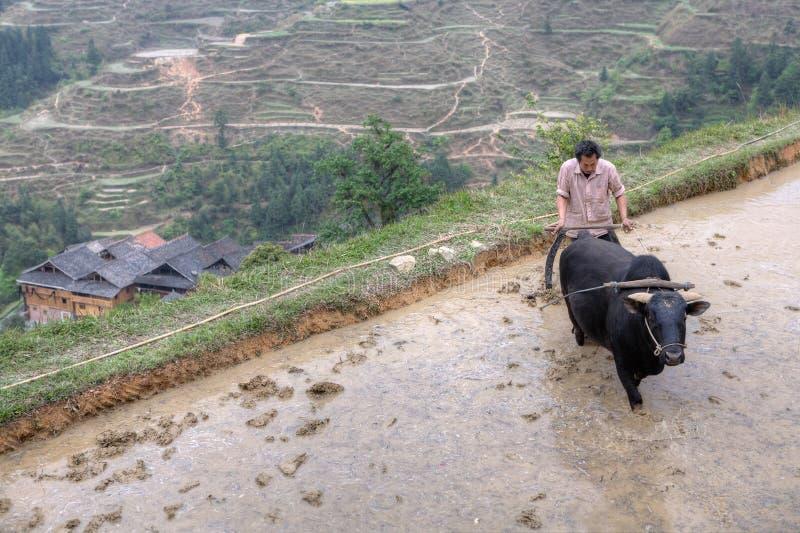 Granjero que ara arroz de arroz con el búfalo, Guizhou, China imagenes de archivo