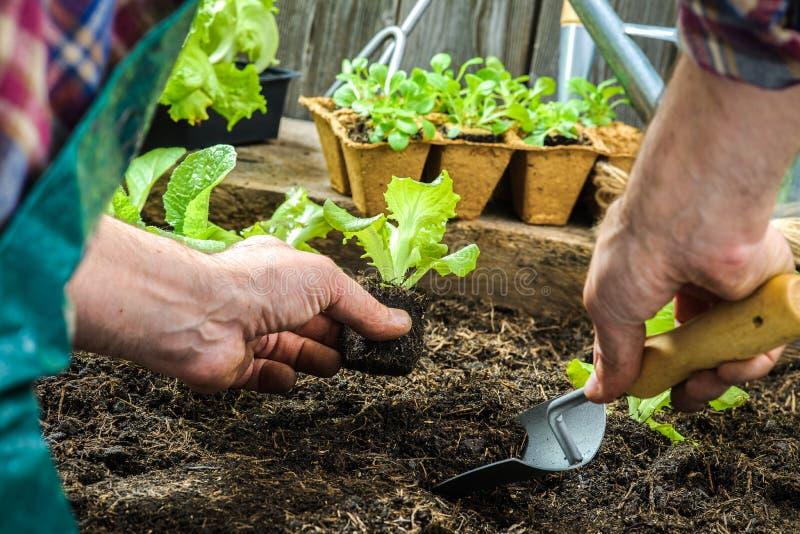 Granjero que planta almácigos jovenes fotos de archivo