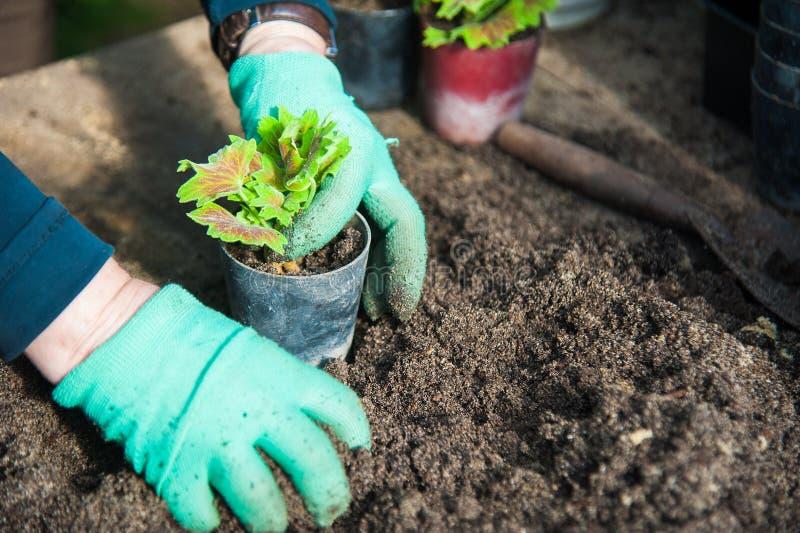 Granjero que planta almácigos jovenes imagenes de archivo