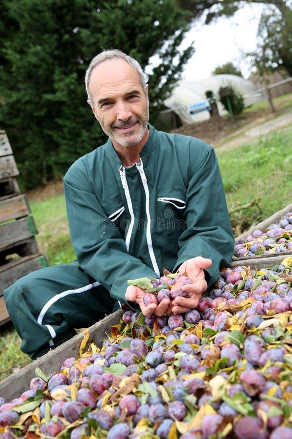 Granjero que se arrodilla delante de la caja de frutas imágenes de archivo libres de regalías