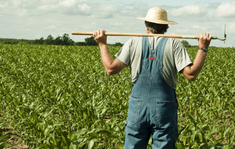 Granjero que se coloca en un campo de maíz fotografía de archivo libre de regalías