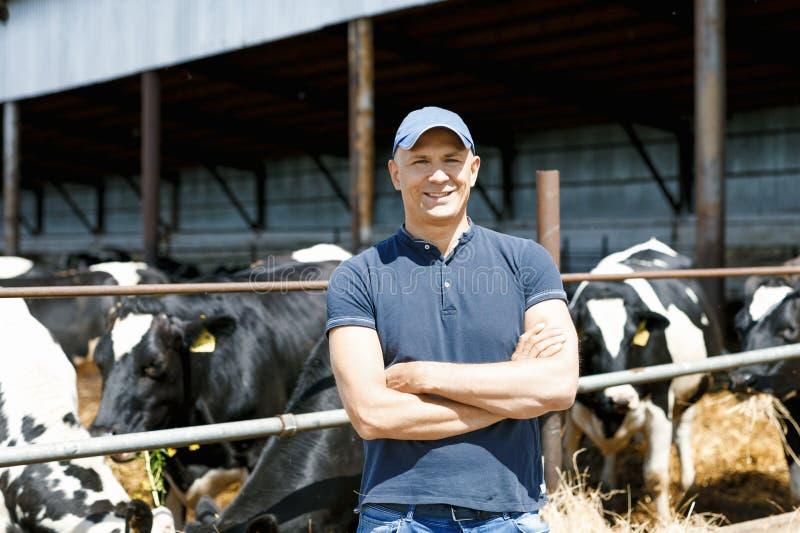 Granjero que trabaja en granja con las vacas lecheras fotos de archivo libres de regalías