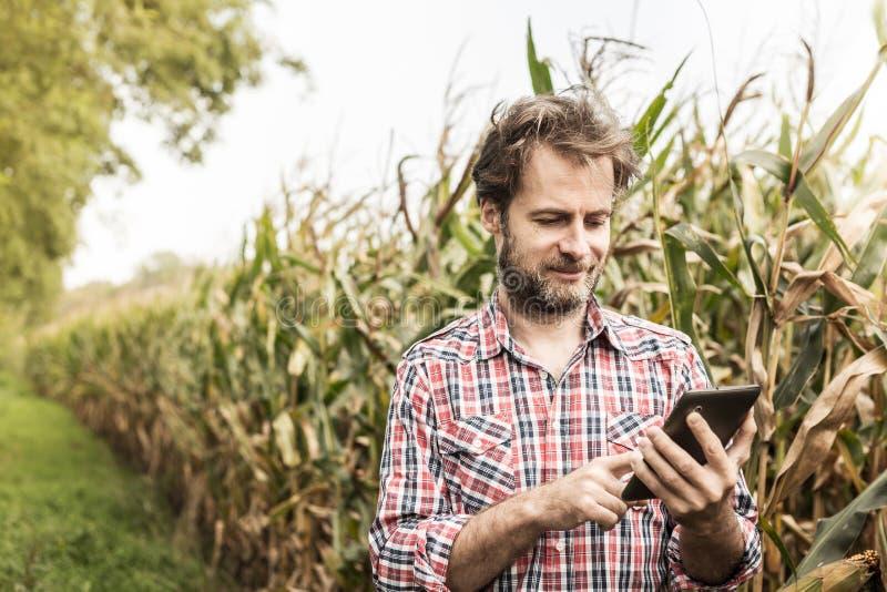 Granjero que trabaja en usar la tableta delante del campo de maíz fotos de archivo libres de regalías
