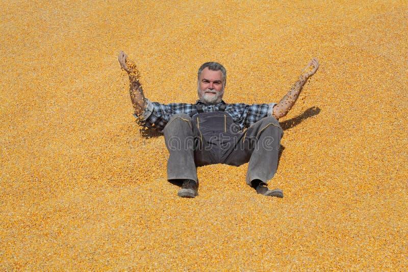 Granjero sonriente alegre en el montón de la cosecha del maíz después de la cosecha y de lanzarla fotos de archivo