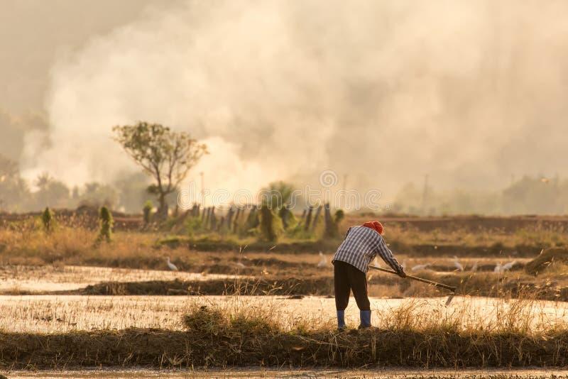 Granjero tailandés imagenes de archivo