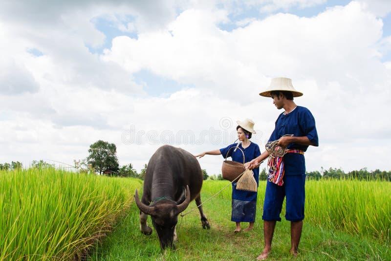Granjero tailandés de los pares con el búfalo imagenes de archivo