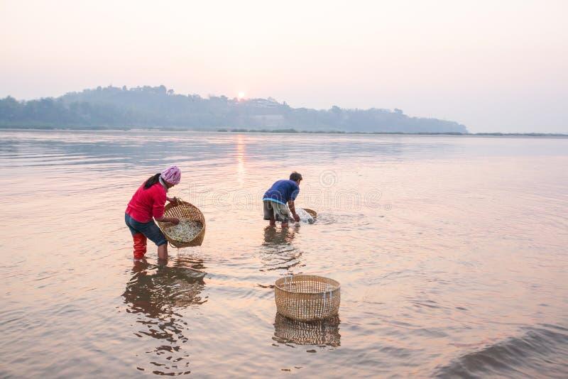 Granjero tailandés que lava a Bean Sprouts en el río Mekong en la salida del sol Bean Sprouts en la cesta de bambú Vehículos orgá fotos de archivo libres de regalías