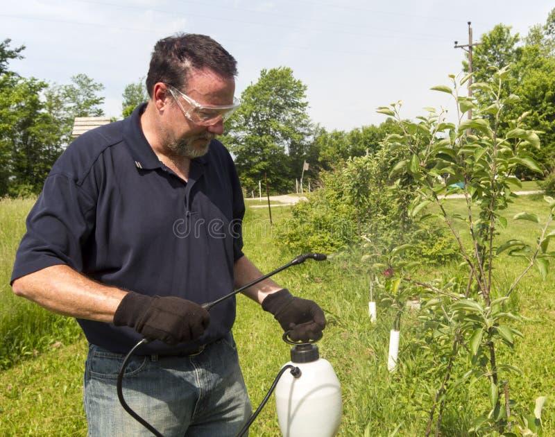 Granjero Using un espray orgánico en algunos manzanos fotografía de archivo libre de regalías