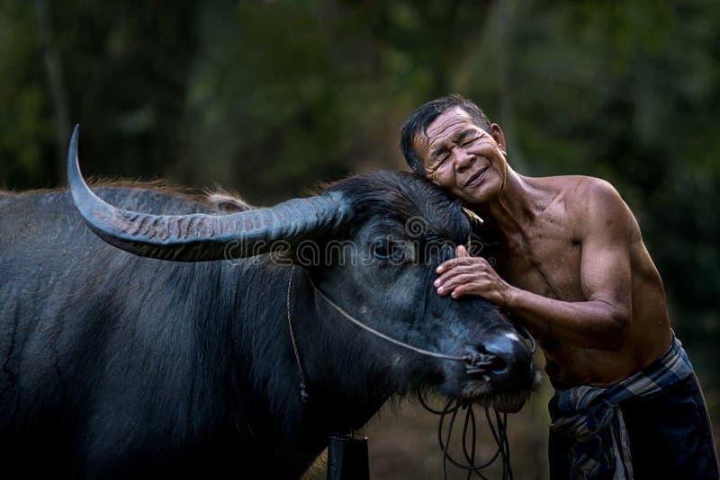 Granjero y su búfalo fotografía de archivo libre de regalías