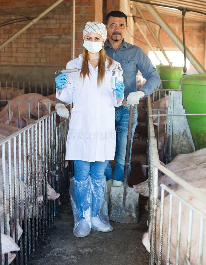 Granjero y veterinario en pocilga de cerdo imágenes de archivo libres de regalías