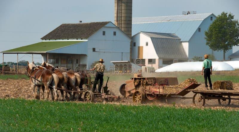 Granjeros de Amish que trabajan los campos imagen de archivo