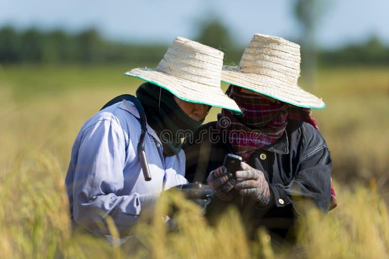 Granjeros del arroz con el teléfono móvil foto de archivo libre de regalías