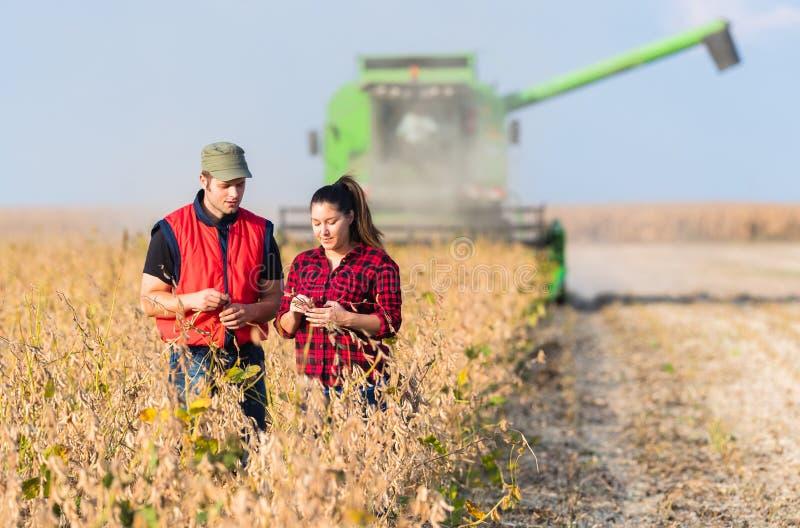 Granjeros en campos de la soja antes de la cosecha fotos de archivo libres de regalías