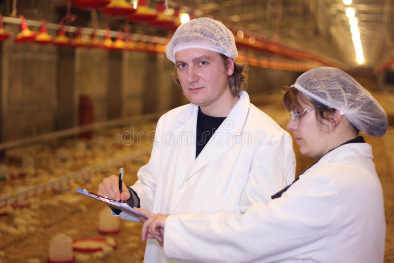 Granjeros en granja de pollo imagen de archivo libre de regalías