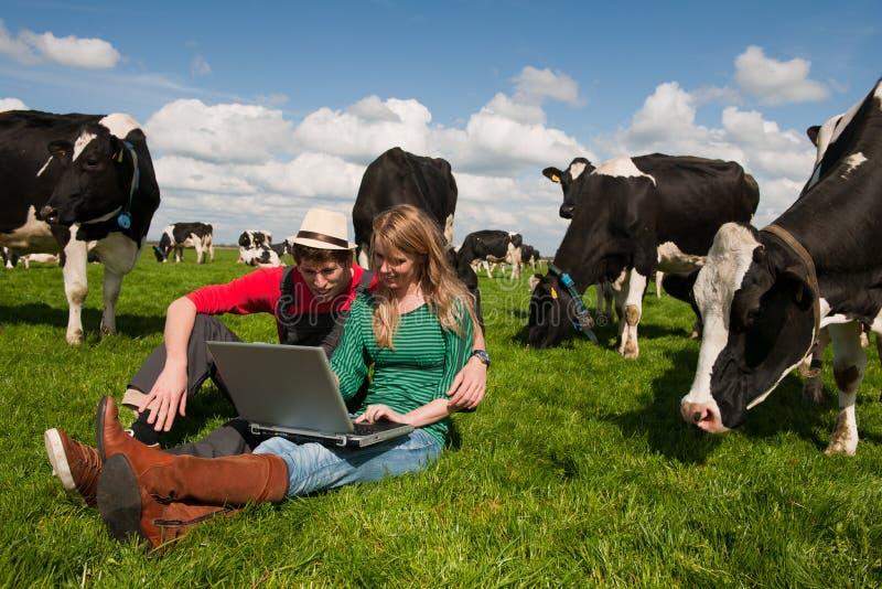 Granjeros jovenes de los pares en campo con las vacas fotos de archivo libres de regalías