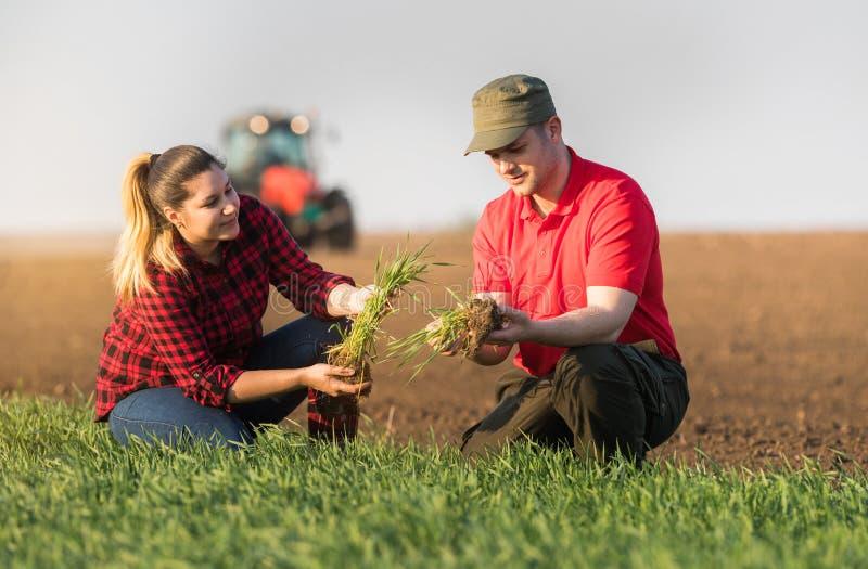 Granjeros jovenes examing campos de trigo plantados foto de archivo