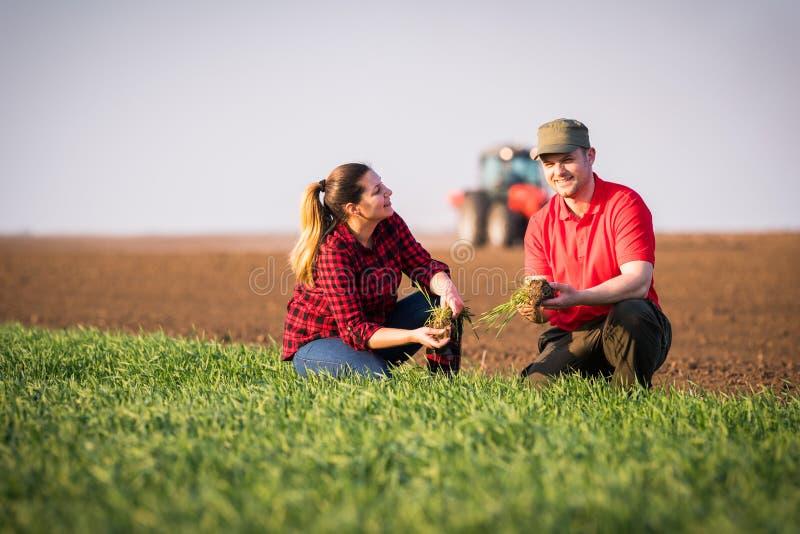 Granjeros jovenes examing trigo plantado mientras que el tractor está arando el fi foto de archivo libre de regalías