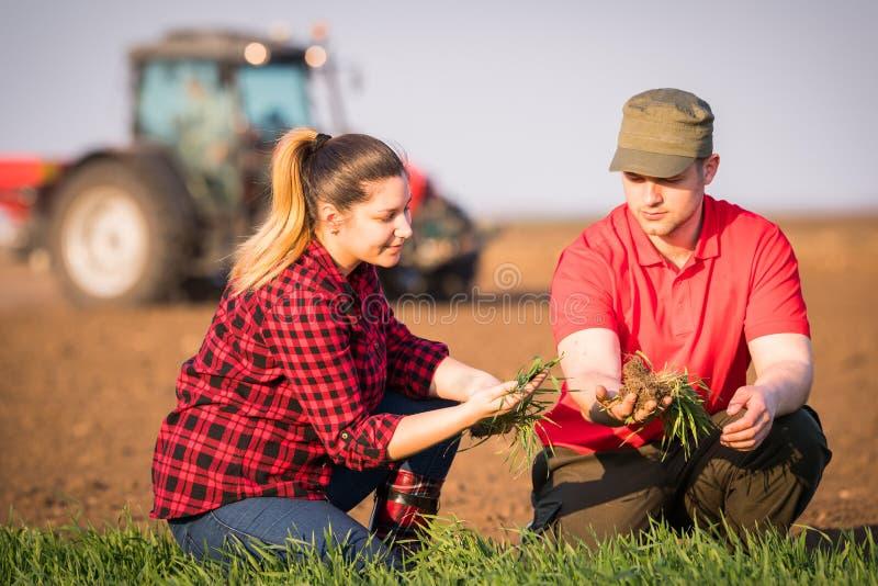 Granjeros jovenes examing trigo plantado mientras que el tractor está arando el fi fotos de archivo libres de regalías