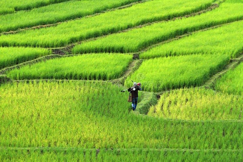 Granjeros que caminan en campo del arroz del canto Paisaje hermoso en chiang imagen de archivo