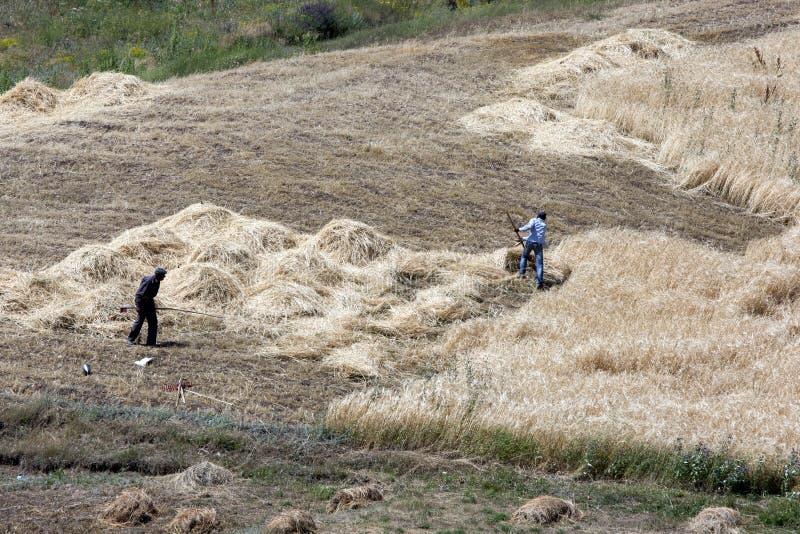 Granjeros que cortan el heno cerca del sitio de la arca de Noah cerca de la ciudad de Dogabeyazit en el este lejano de Turquía imagenes de archivo