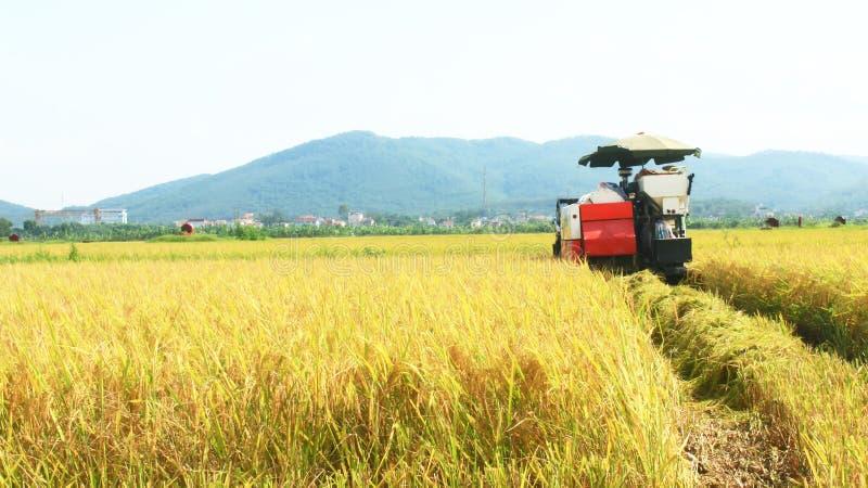 Granjeros que cosechan el arroz en los campos por la máquina fotografía de archivo libre de regalías