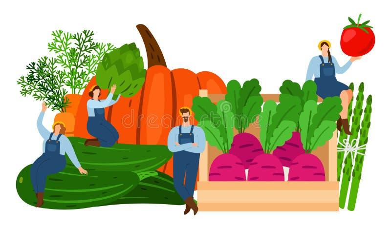 Granjeros y verduras Ejemplo del vector del tiempo de cosecha Verduras frescas y caracteres planos minúsculos libre illustration