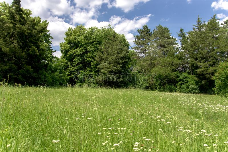Granne mit grünem Gras in einem sonnigen Park des grünen Sommers stockbild