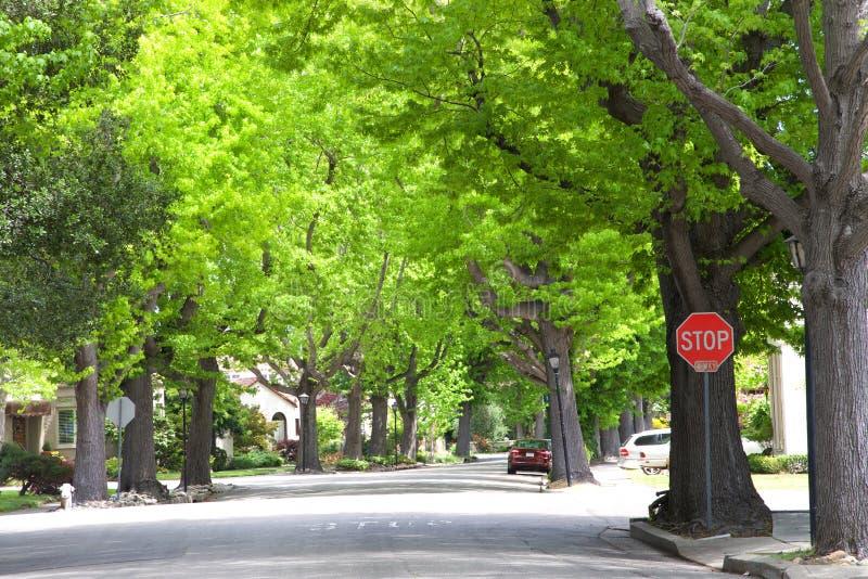 Grannskapgata med stora gröna träd för stopptecken royaltyfria foton